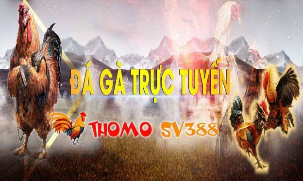 Đá gà ThomoSV388